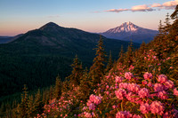 Mt Jefferson and Rhododendrons
